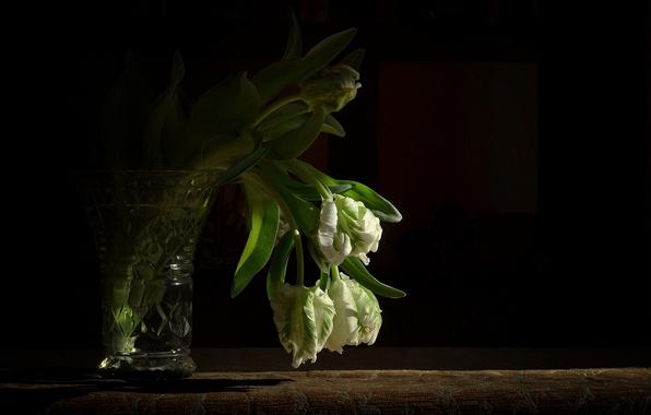 Picture background, black, bouquet, tulips, vase, white
