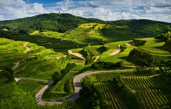 Picture road, landscape, nature, view, field, the vineyards
