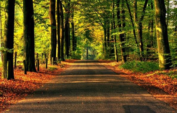 Picture road, forest, asphalt, trees, nature