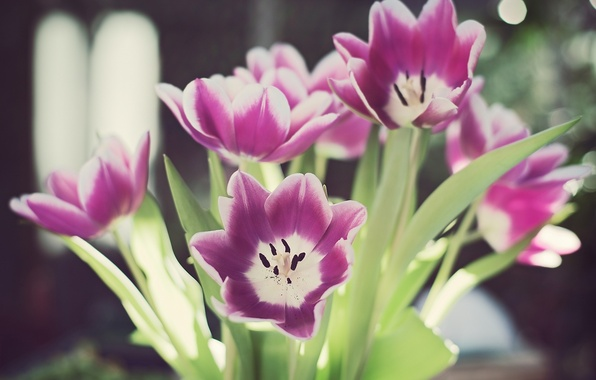 Picture leaves, flowers, glare, stems, petals, tulips, bokeh