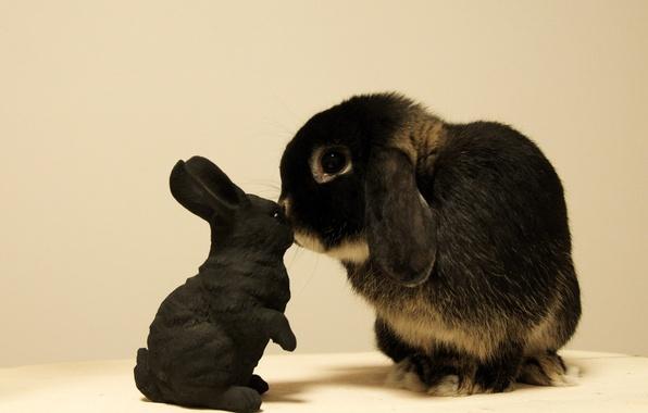 Picture toy, rabbit, Bunny