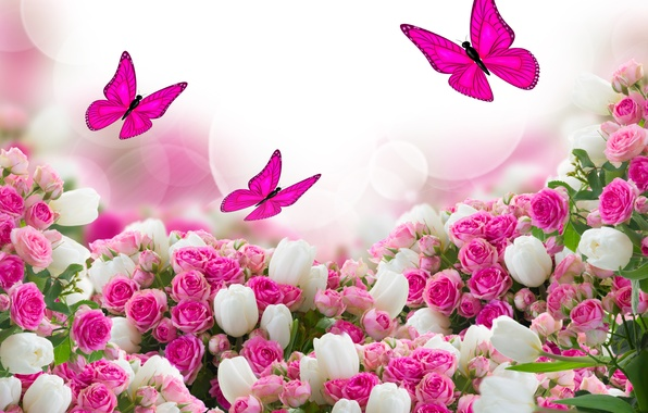 Picture butterfly, flowers, roses, tulips, leaves