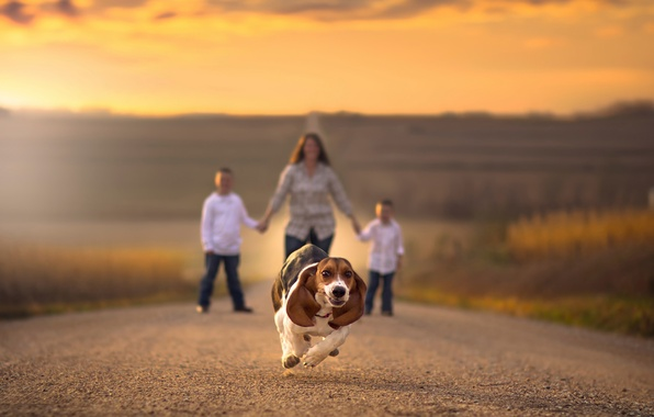 Picture road, children, dog, running, bokeh