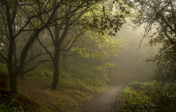 Picture forest, summer, fog, path