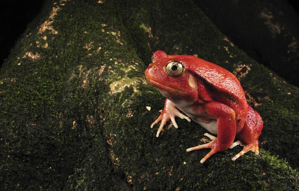 Picture Red, Frog, Moss
