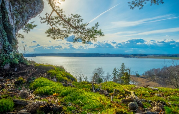 Picture forest, the sky, grass, the sun, clouds, river, tree, shore, view, Sweden, bumps, hill, Grodinge