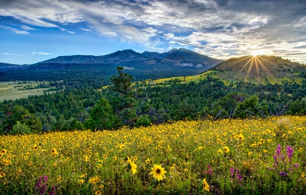Picture flowers, mountains, sunrise, dawn, valley, meadow, panorama, AZ, Arizona