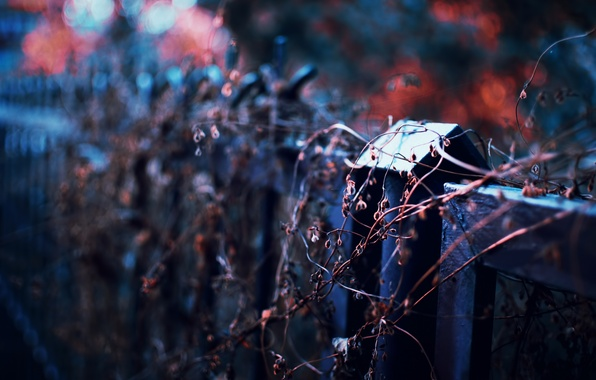 Picture autumn, the fence, plant, focus, the evening, bokeh, dry
