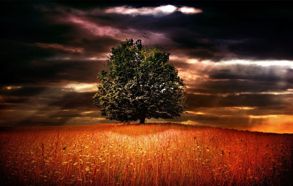Picture NATURE, TREE, GRASS, HORIZON, The SKY, FIELD, CLOUDS, FLOWERS, CLOUDS, RAYS, GLOOMY, The GAPS