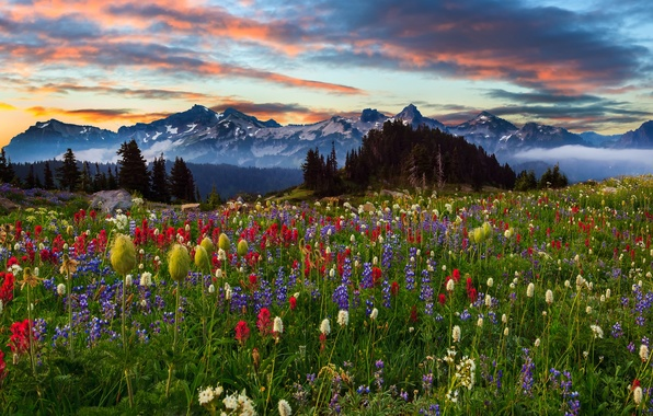 Picture the sky, clouds, trees, landscape, sunset, flowers, mountains, nature