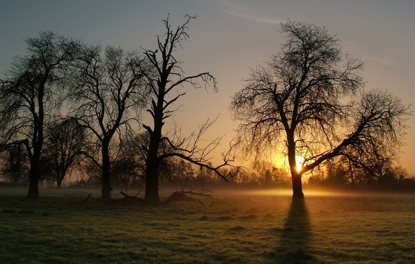 Picture fog, tree, morning