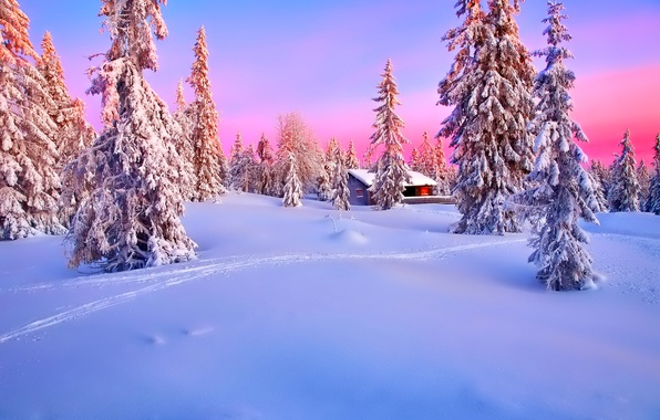 Picture winter, forest, the sky, snow, sunset, house, spruce, glow