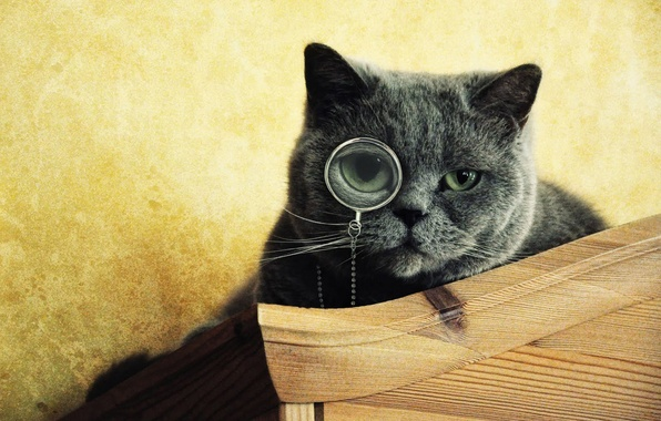 Picture eyes, cat, grey, muzzle, looks, monocle