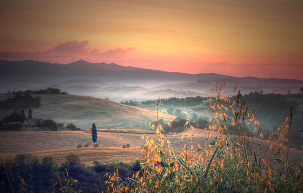 Picture grass, trees, fog, dawn, hills, field, plants, morning, Italy, Tuscany