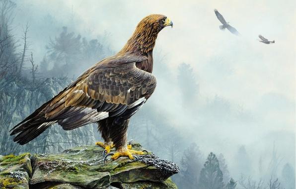 Picture trees, flight, landscape, nature, fog, rocks, bird, eagle, picture, Golden Eagle, Alan M. Hunt