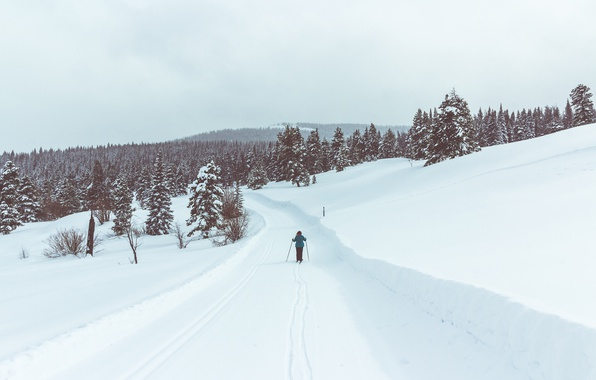 Picture road, winter, person, ski, pine, skiing, snowing
