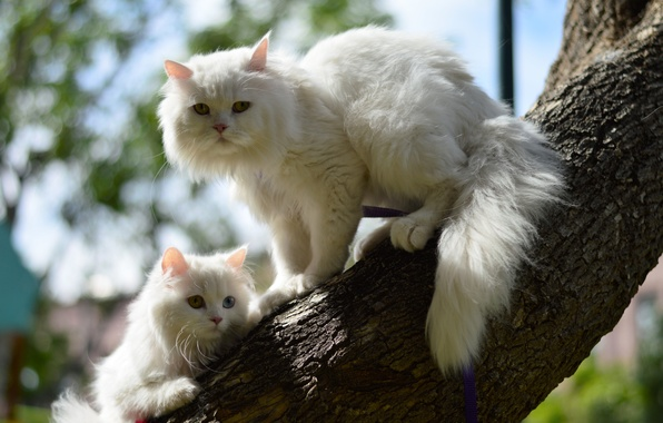 Picture cat, cats, tree, kitty