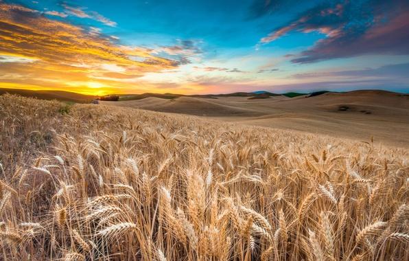 Picture wheat, field, the sky, clouds, landscape, sunset, nature, sky, field, landscape, nature, sunset, view, clouds, …