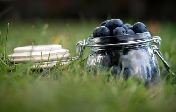 Picture macro, berries, blueberries, Bank