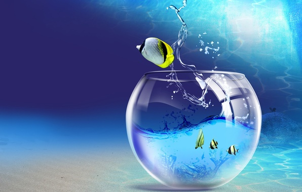 Picture water, fish, aquarium, 150