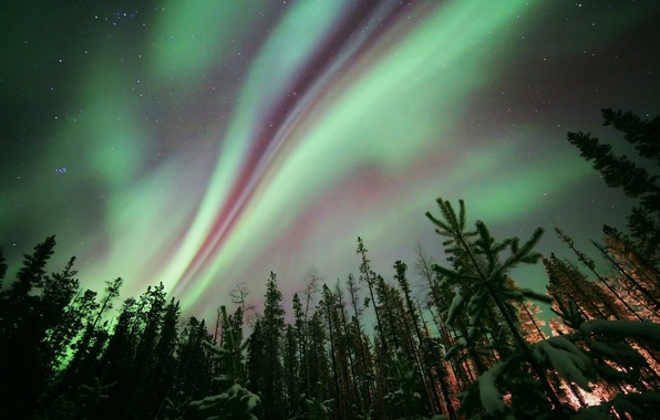 Picture forest, stars, trees, night, nature, Northern lights, Aurora Borealis