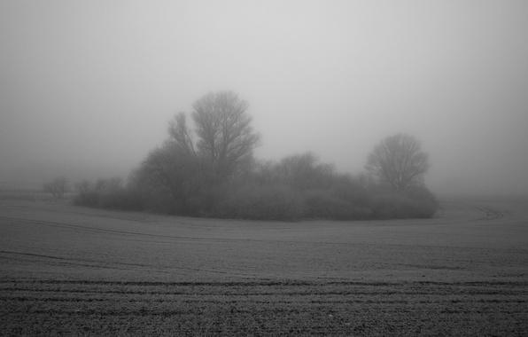 Picture field, fog, tree, Bush