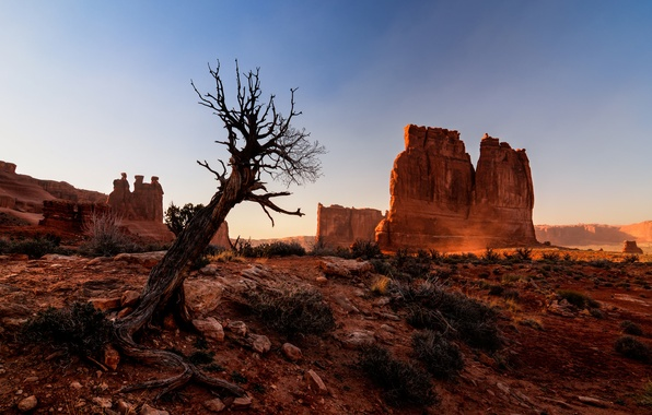 Picture nature, tree, rocks, desert, canyon, Utah, USA, Arches National Park, Arches national Park
