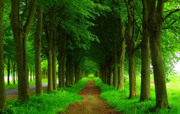 Picture road, forest, trees, nature, Park, spring, forest, road, trees, nature, park, spring, walk, path