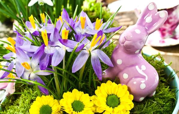 Picture flowers, spring, yellow, rabbit, Easter, purple, crocuses, figurine, holidays