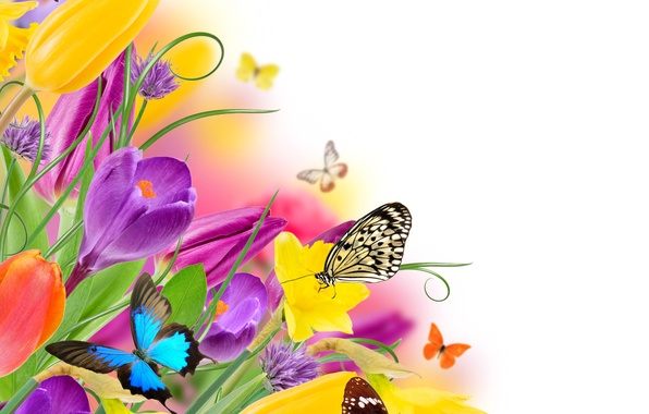 Picture butterfly, flowers, spring, colorful, tulips, fresh, yellow, flowers, beautiful, tulips, spring, purple, butterflies