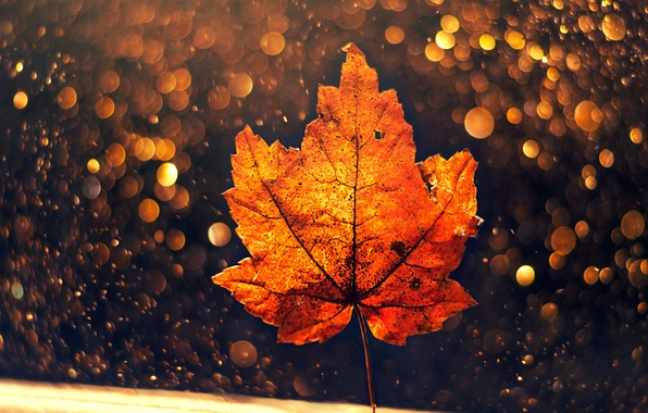 Picture autumn, macro, sheet, bokeh