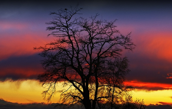 Picture the sky, clouds, sunset, tree, silhouette, glow