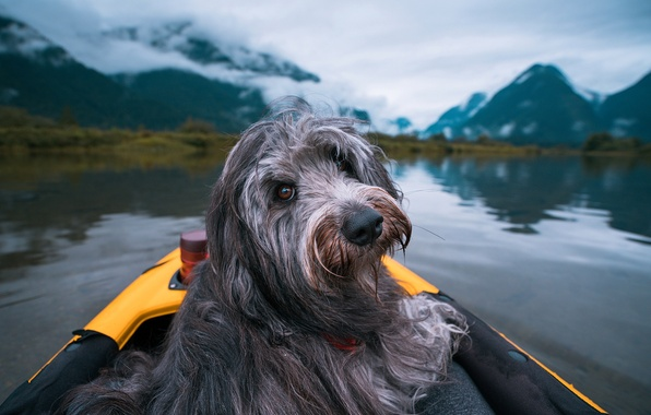 Picture look, clouds, landscape, mountains, nature, lake, boat, dog