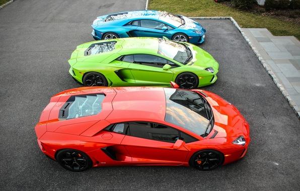 Picture green, Lamborghini, red, blue, three, mixed, LP700-4, Aventador