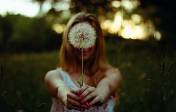 Picture girl, dandelion, hands