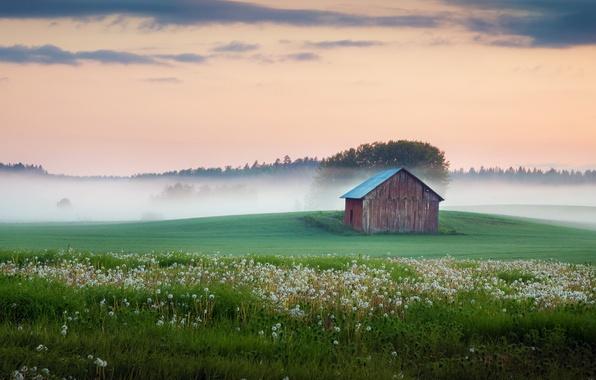 Picture field, fog, house, dandelions