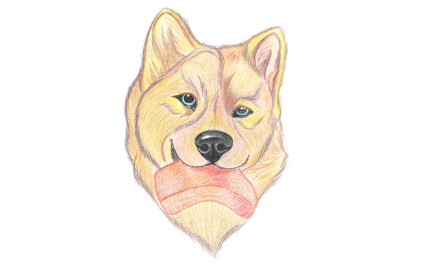 Picture food, dog, pencil drawing