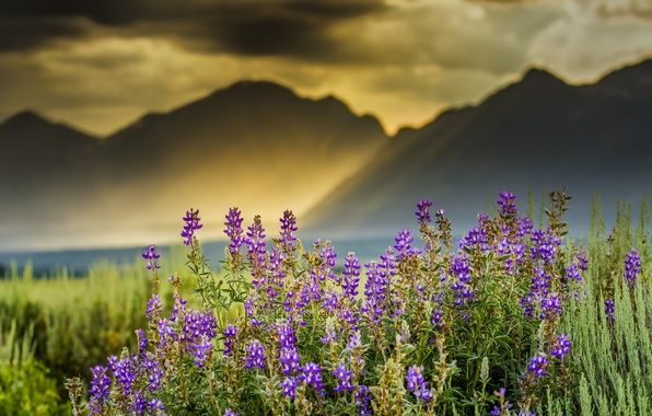 Picture clouds, rays, flowers, mountains