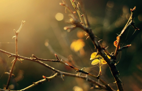 Picture leaves, macro, trees, branches, yellow, background, tree, widescreen, Wallpaper, web, blur, leaf, wallpaper, widescreen, background, …