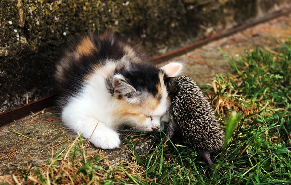 Picture kitty, baby, hedgehog, Dating