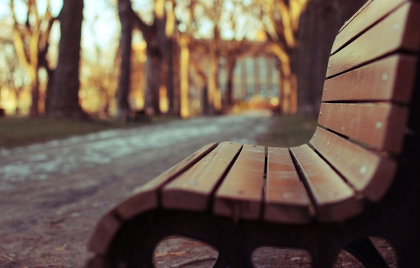 Wallpaper Macro, Trees, Bench, Park, Background, Wallpaper