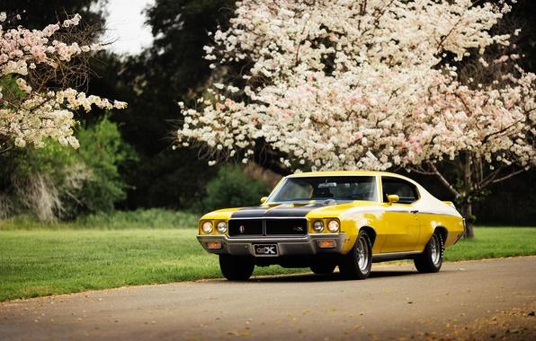 Picture muscle car, GSX, Buick, Skylark