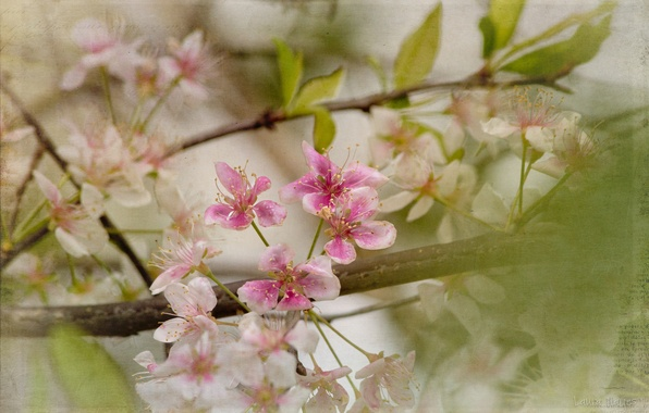 Picture leaves, flowers, branches, spring