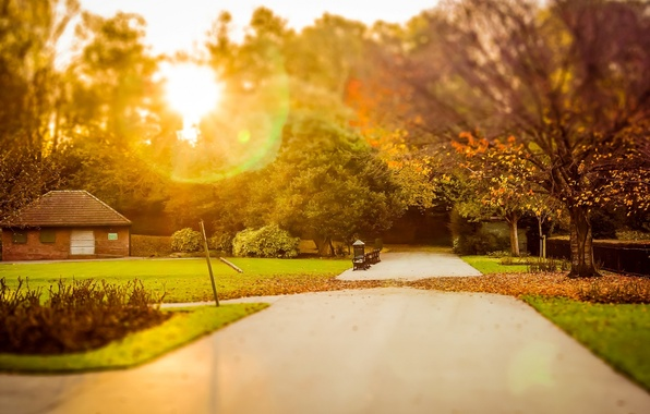 Picture greens, autumn, grass, leaves, the sun, rays, trees, nature, house, background, tree, Wallpaper, foliage, blur, …
