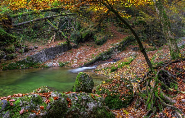 Picture autumn, leaves, water, trees, lake, river, stones, moss