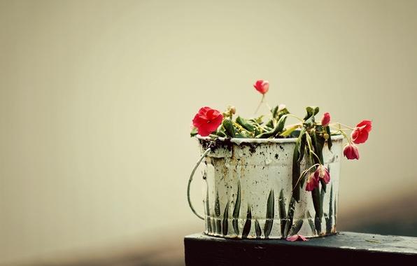 Picture grass, macro, flowers, creative, figure, plant, bucket, flowers, creative, bucket, capacity