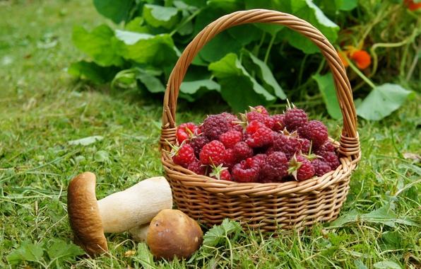 Picture raspberry, basket, mushrooms, mushrooms
