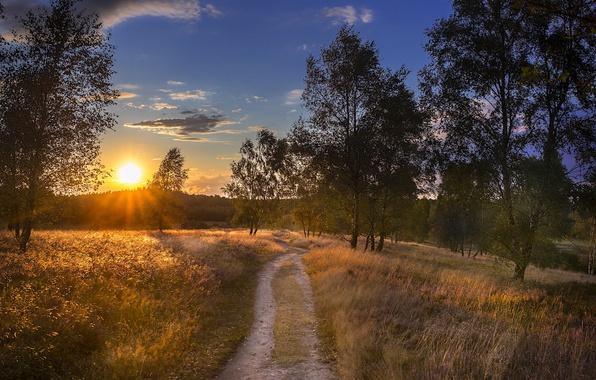 Picture road, autumn, sunset, nature