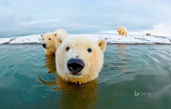 Picture sea, the sky, bear, polar bear, Arctic