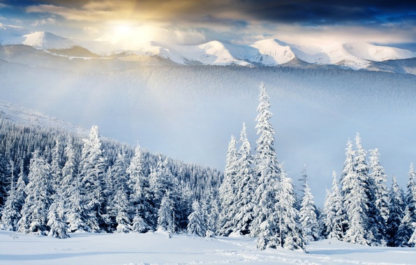 Picture winter, forest, snow, traces, dawn, the snow, tree, hills